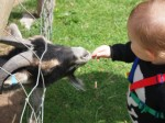 Image: Feeding the Goat at Ark Animal Sanctuary, Twyford, Evesham by Fimb (License: CC-BY 2.0)