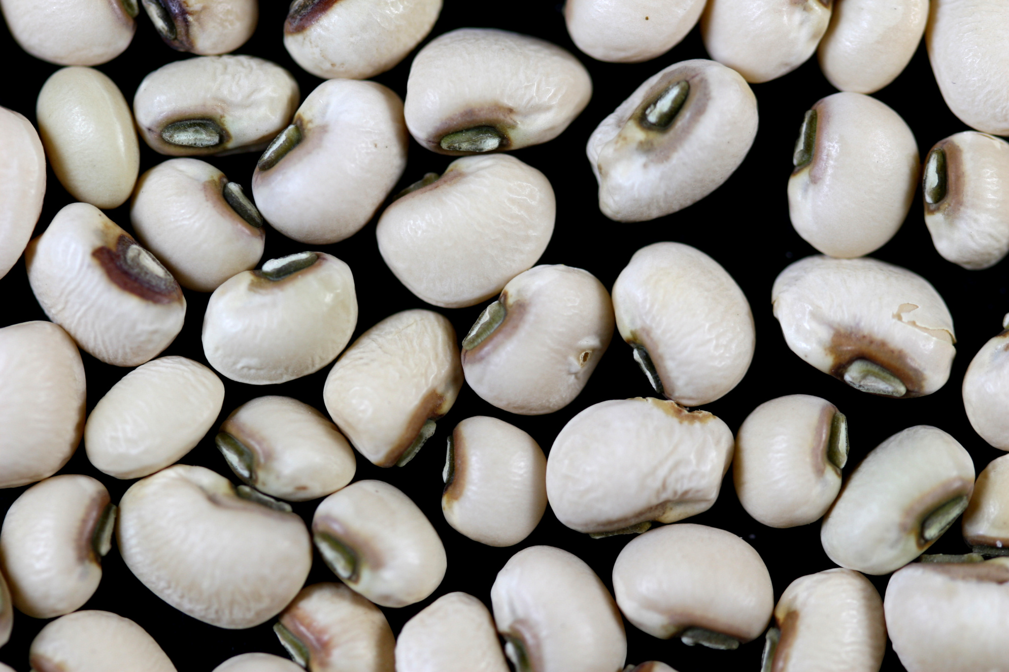 Image: Black Eyed Peas by Sanjay ach (License: CC BY-SA 3.0 Unported)