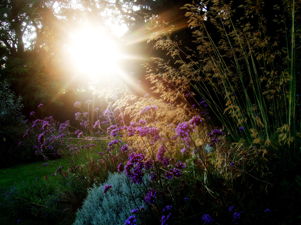 Evening Grasses (credit: Lenny Montana, license: CC-BY)