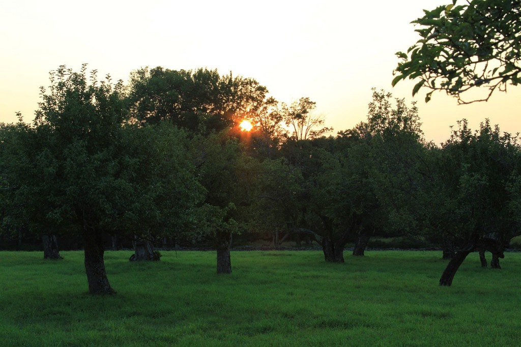 """Orchard at Sunset"" (credit: ""Public Domain Pictures"", license CC0)"