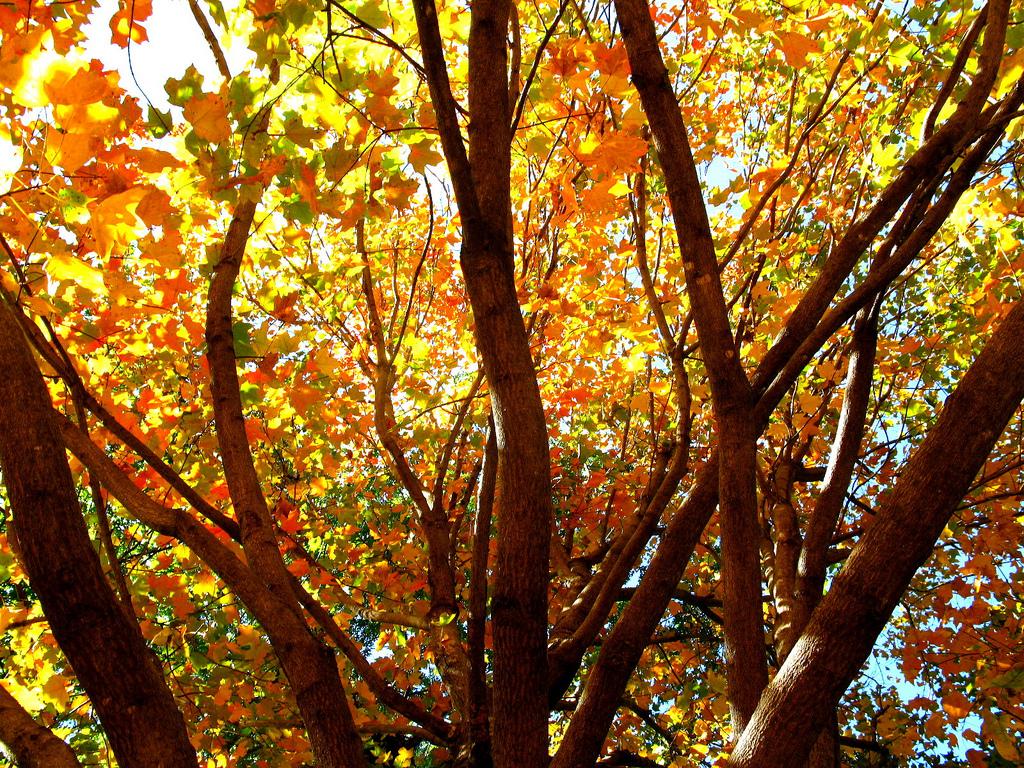 """""""Autumn Bloom"""" (credit: OakleyOriginals, license: CC-BY 2.0)"""