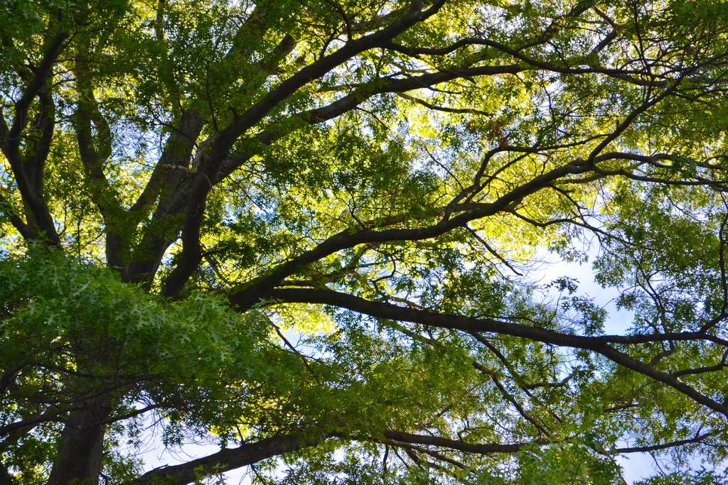 """""""trees - grateful365 026"""" by Heather Katsoulis (CC BY-SA)"""