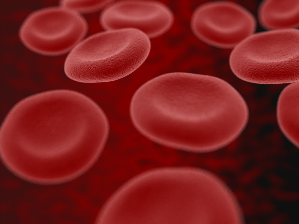 """blood cells"" by RATusus (CC-BY)"