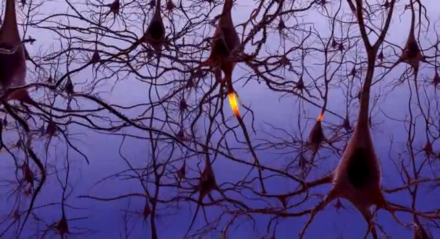 """""""Neural signaling in the human brain"""" by the National Institute on Aging (Public Domain)"""