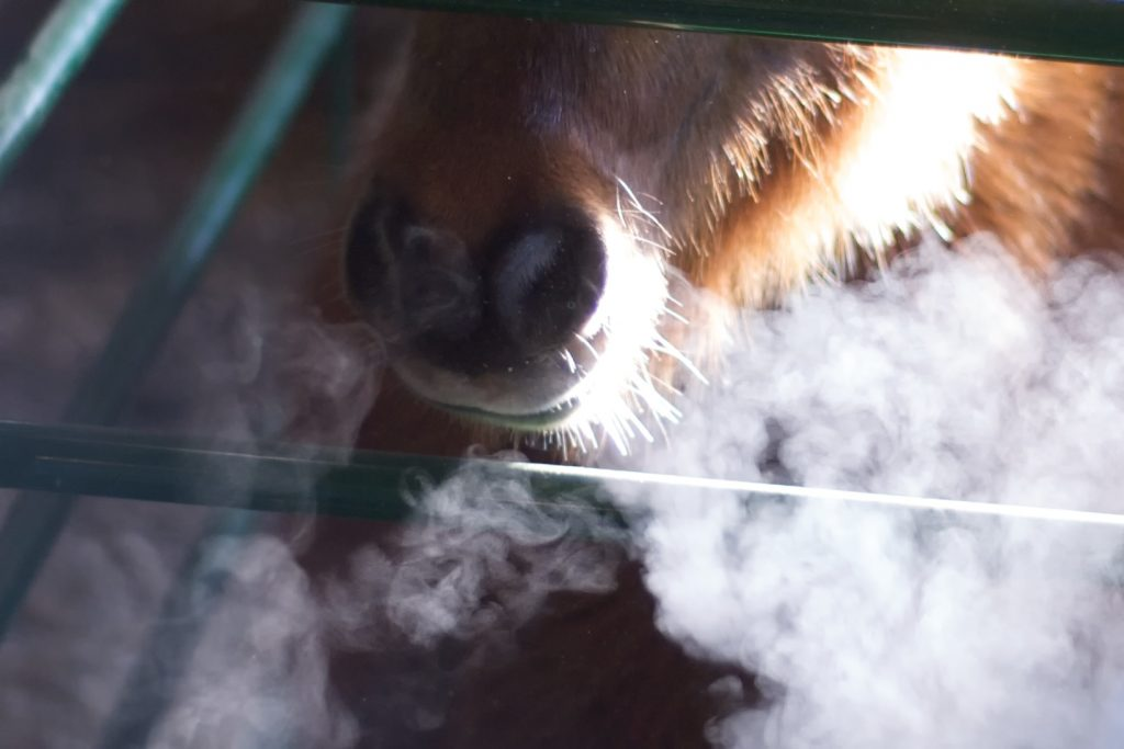 """Gingerbread Horse's Breath Smoke"" (credit: Peter Markham, license: CC BY-SA)"