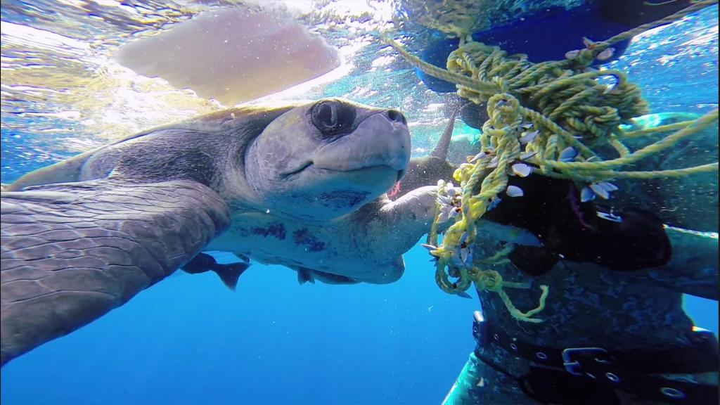 Diver saves sea turtle