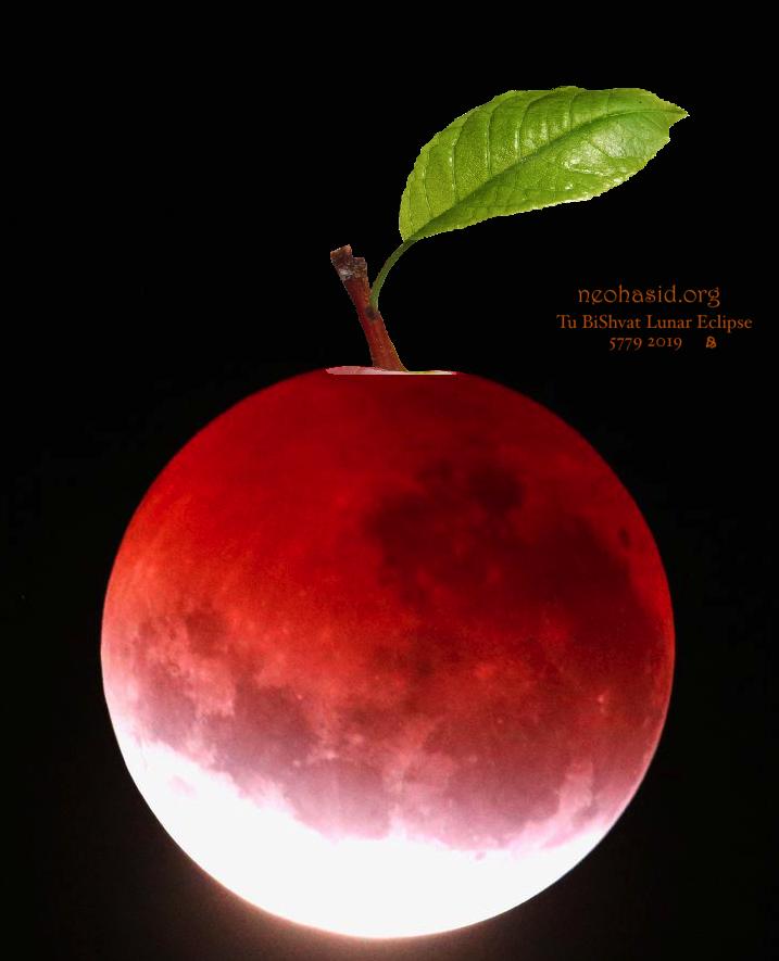 Moon Apple (neohasid.org, CC BY-SA)