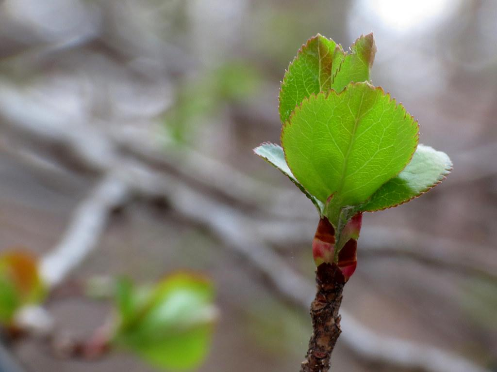 Tree with new leaves (credit: Katja Schulz, license: CC BY)