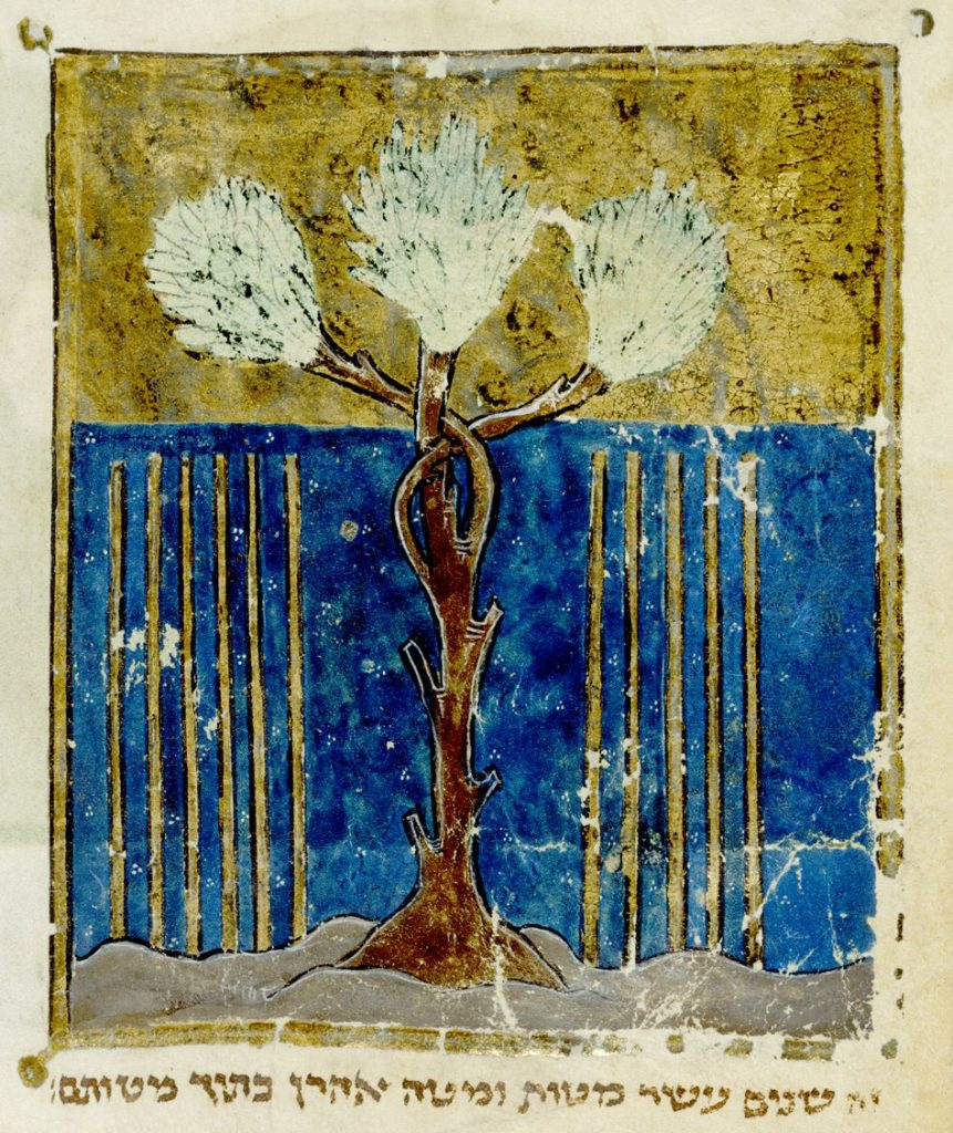 Aharon's flowering rod from BL Add 11639, f. 519v