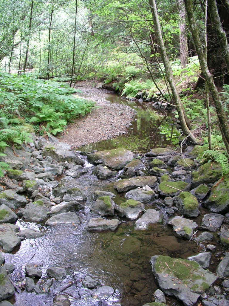 """Stream in the redwoods"" (credit: inajeep, license: CC BY-SA)"