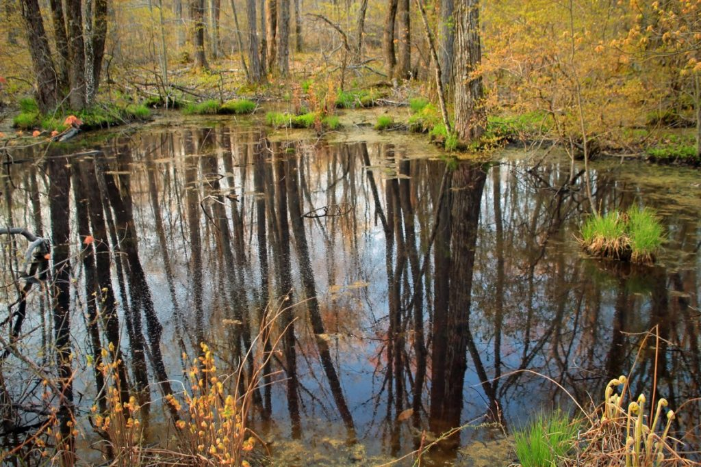 Vernal pool, Columbia Wildlife Management Area, Warren County (Public Domain)