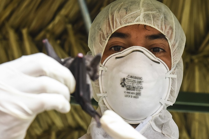 Publio Gonzalez, a biologist with the Gorgas Institute, holds a bat June 6, 2018, in Meteti, Panama. Gonzalez and U.S. military doctors were participating in an Emerging Infectious Diseases Training Event, in which they received informational lectures from Panamanian infectious disease experts and field studies of possible virus-carrying wildlife and insects. The event took place during Exercise New Horizons 2018, which is a joint training exercise where U.S. military members conduct training in civil engineer, medical, and support services while benefiting the local community. (U.S. Air Force photo by Senior Airman Dustin Mullen/Released)
