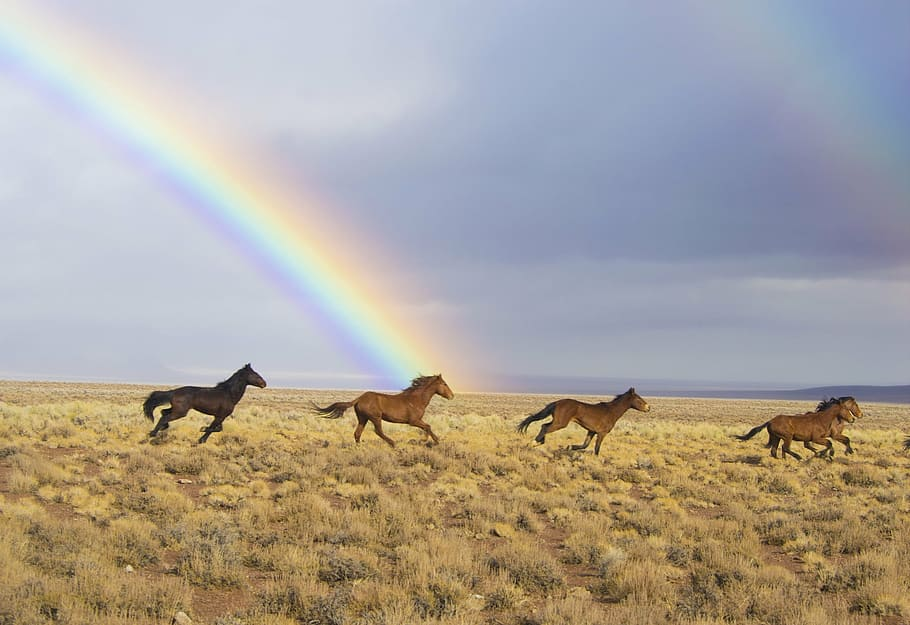 wild horses, rainbow, released, feral, running (source: pxfuel, photo credit: n/a)
